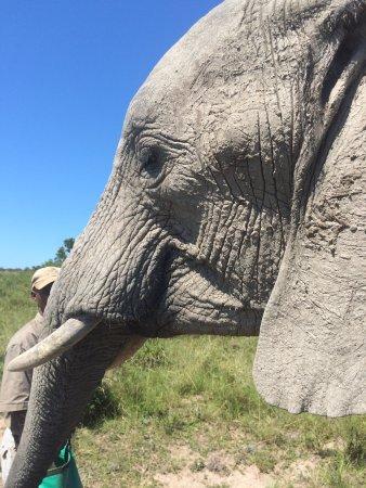 Inkwenkwezi Private Game Reserve Safari Lodge: photo2.jpg
