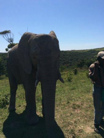 Inkwenkwezi Private Game Reserve Safari Lodge: photo3.jpg