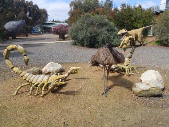 Byford, ออสเตรเลีย: emu