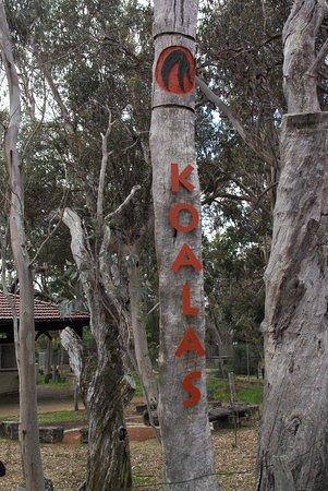 Yanchep, Australia: begin van het koala wandelpad