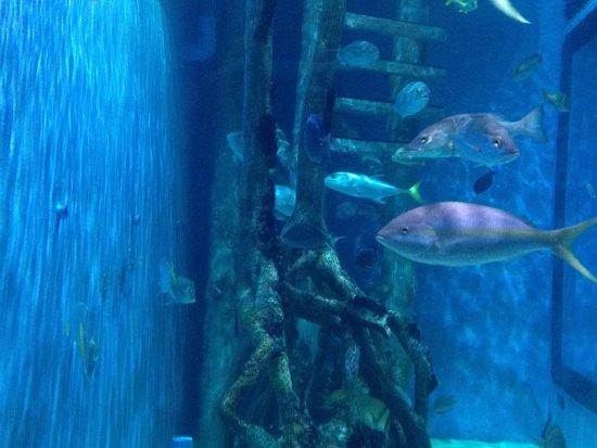 Rumfish Grill Aquarium Life