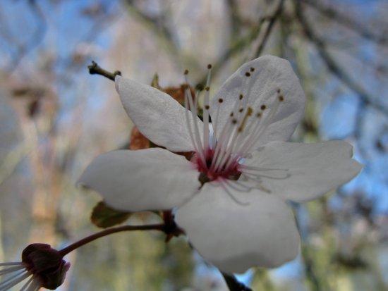 Bedale, UK: Spring flowers blooming