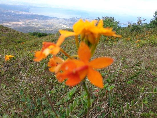 Granada, Nicaragua: orchid