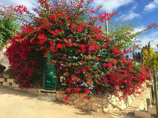 Isla Plana, Spain: Fina planteringar