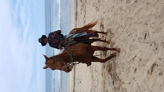 CJM Country Stables : Fabulous horseback riding in Kauai on Poipu beach with guide Mr. John Wayne and horse Champ!