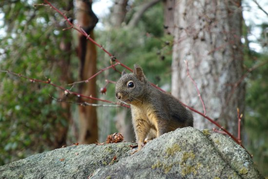 Halfmoon Bay, Kanada: Our new friend, Mr./Ms. Squirrel