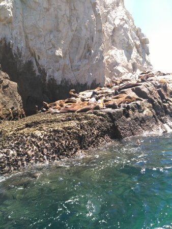 Cabo Expeditions: IMG_20170325_132448_large.jpg