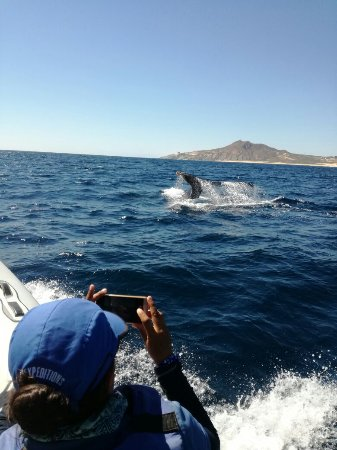 Cabo Expeditions: IMG-20170325-WA0024_large.jpg