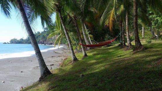 Casa Corcovado Jungle Lodge : 20170323_135220_large.jpg