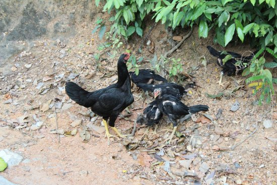 Rayong Province, Thailand: Some of the friendly inhabitants