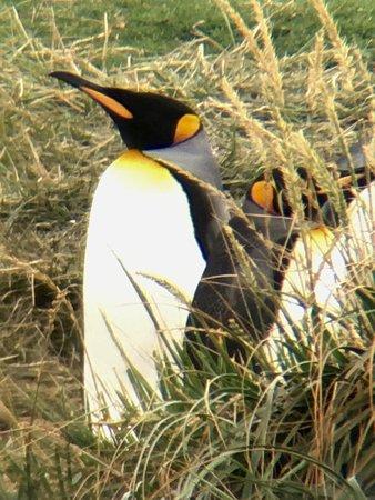 Tierra del Fuego, Chile: photo5.jpg