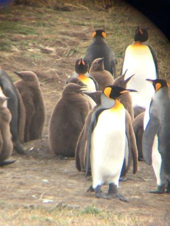 Tierra del Fuego, Chile: photo6.jpg