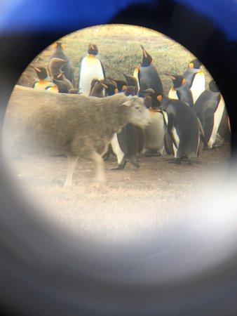 Tierra del Fuego, Chile: photo8.jpg