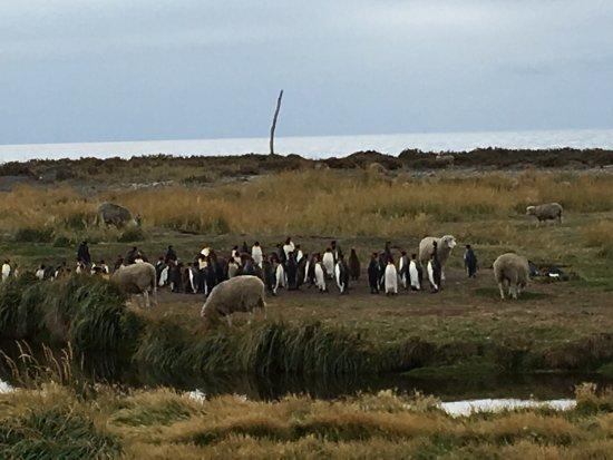 Tierra del Fuego, Chile: photo9.jpg