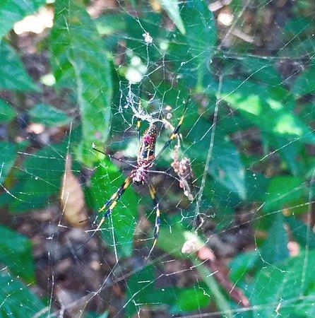 Davie, FL: Spider!