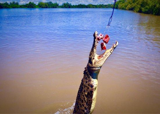 Spectacular Jumping Crocodile Cruise: photo0.jpg