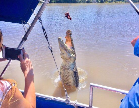 Spectacular Jumping Crocodile Cruise: photo2.jpg