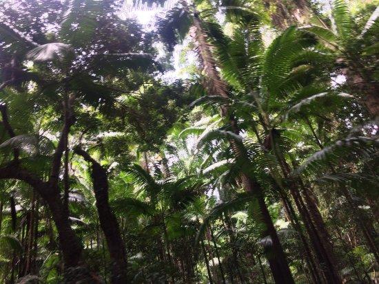Urangan, Australia: photo2.jpg