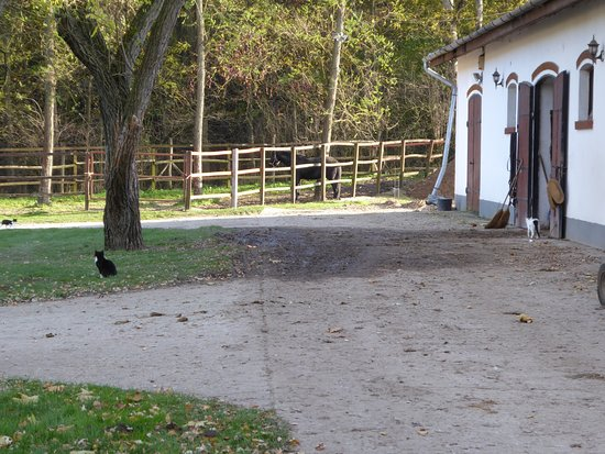 Lazar Equestrian Park: 3 cats by one of the horse barns