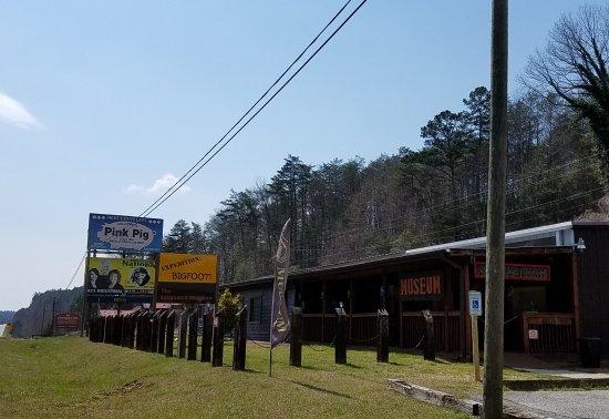Cherry Log, GA: the place