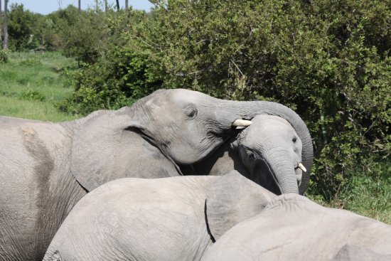 ‪‪Ruaha National Park‬, تنزانيا: Everyone needs a hug now and then !‬