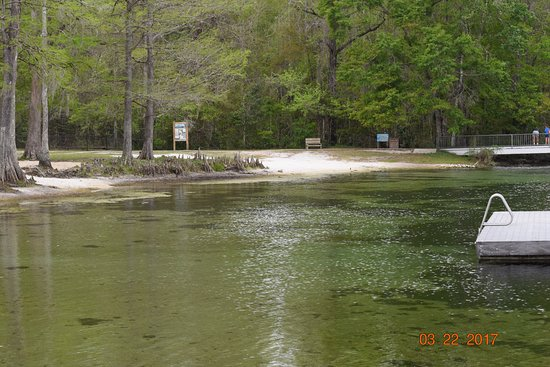 Saint Marks, FL: The swimming area at Edward Ball State Park