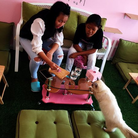 Rawai, Thailand: Mr. Grey try to eat a dessert