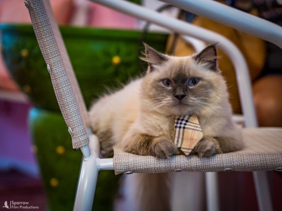 Rawai, Tailandia: i am so serious