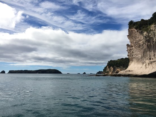 Whitianga, New Zealand: Had an absolute ball hanging with Ken for a few hours. We seen so many marine creatures with Orc