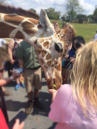 Busch Gardens: photo0.jpg