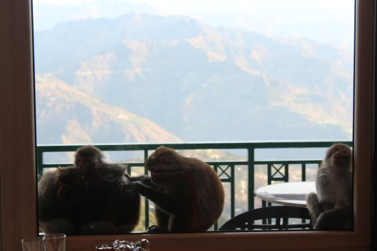 Grand View Hotel: Monkeys came to our balcony, the window didn't allow them to come inside but we got some good pi
