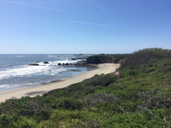 Pescadero, CA: Great view of the beach and some elephant seals in the far back