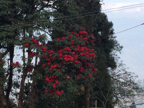 Sinclairs Darjeeling: photo2.jpg