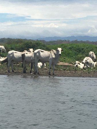 Tarcoles, Costa Rica: photo3.jpg