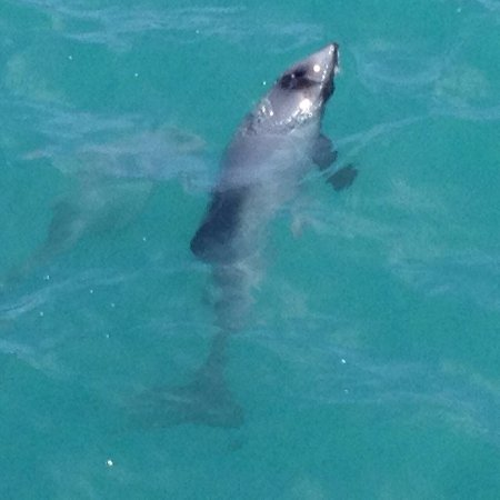Akaroa Dolphins: photo0.jpg