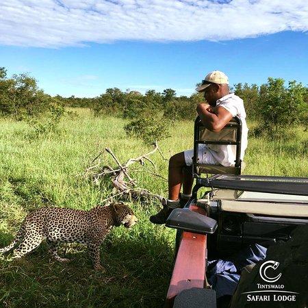 Manyeleti Game Reserve, South Africa: Male leoapard, Rhulani, and tracker, Eric