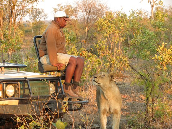 Manyeleti Game Reserve, แอฟริกาใต้: Our famous 'Eric & the Lion' photo
