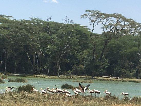 Lake Elementaita 사진
