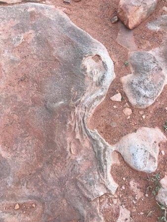 Tuba City, AZ: Dinosaur Tracks