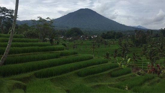 Jatiluwih Green Land: photo0.jpg