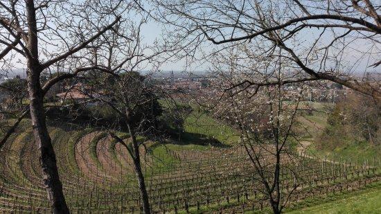 Buttrio, Italien: Aussicht von der Terrasse