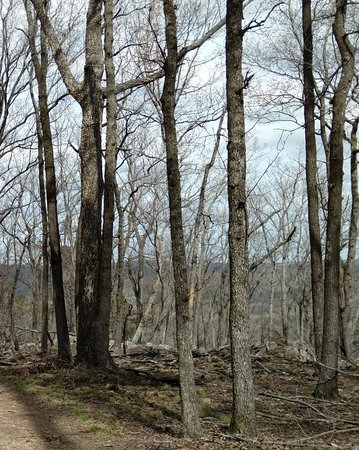 Albemarle, Carolina del Norte: Fall mountain trail