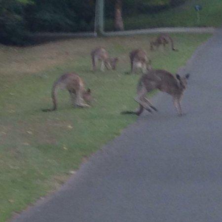 Yandina, Avustralya: Mt Ninderry