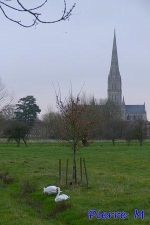 Harnham, UK: Cathédrale de Salisbury. Photographiée à une cinquantaine de mêtres du guest house.