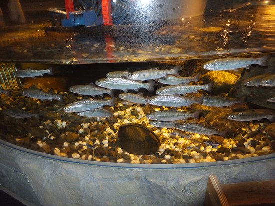 Chitose, Japón: fishes