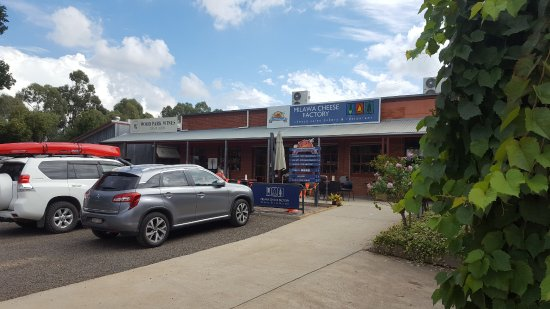 Milawa, Australia: Plenty of parking and easy access to the cheese tasting and restaurant areas.