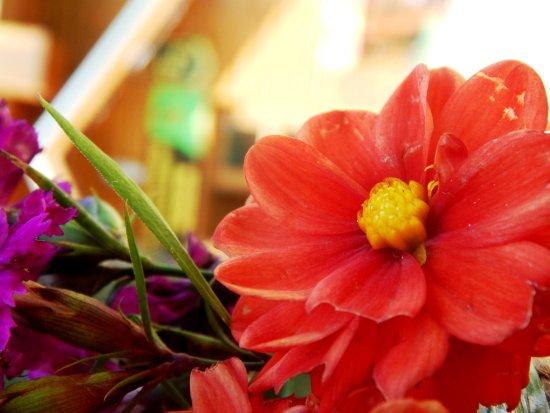 Demanovska Dolina, Eslováquia: Kvetinová výzdoba