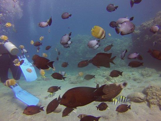 Portulano Dive Resort: photo1.jpg