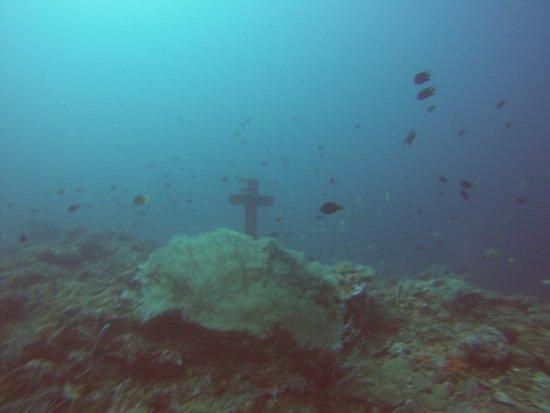 Portulano Dive Resort: photo2.jpg