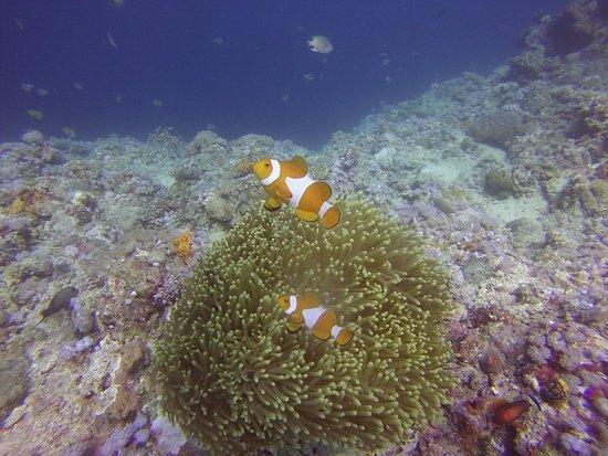 Portulano Dive Resort: photo3.jpg